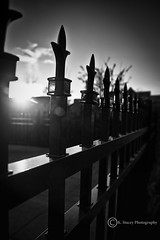 Fence Friday BW