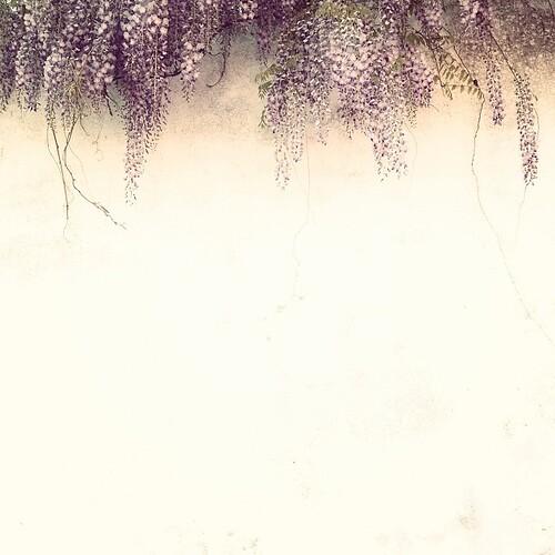 Les plus belles fleurs sont celles qui sont cueillies avec le cœur.