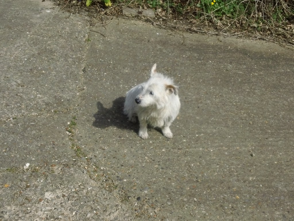 """No I won't bark - seen it all before.'' Lovely little farm dog, quite long in the tooth but friendly. (Near Ashurst)."