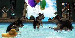 Critter Adventures in the Fairelands: Puppy Pool Parti in The Golden Delta