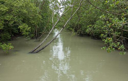 sea nature island nationalpark asia southeastasia malaysia mangroves johor pulaukukup kukupnationalpark