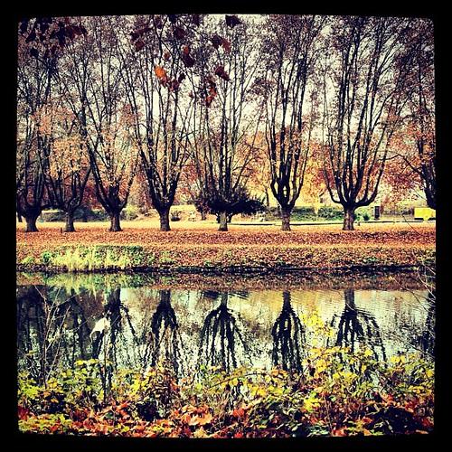 Autumn at the Saar river.