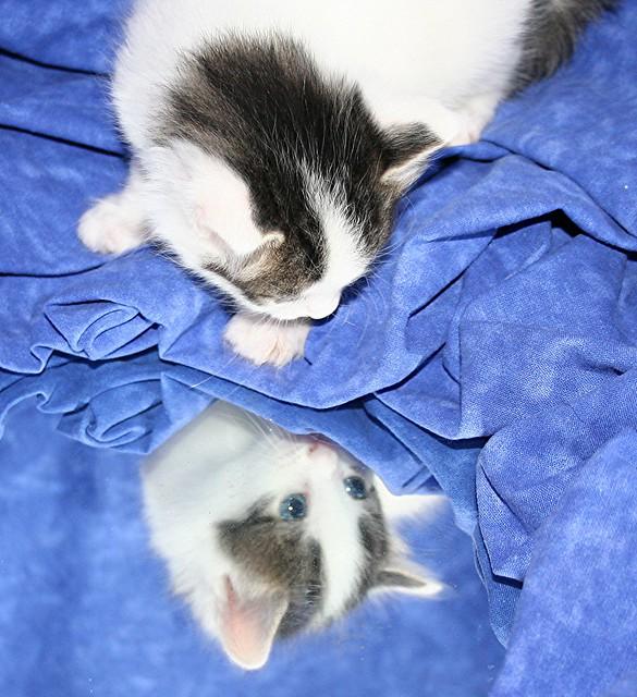 1 tablecloth 1 mirror 1 kitten