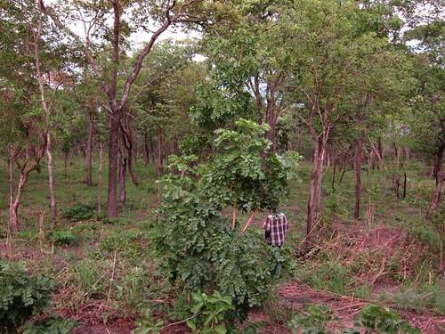 Tanzanian Forest Africa by Danalynn C