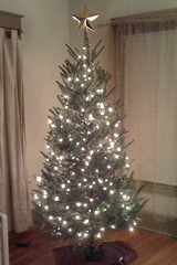 Tree 2011 Phase 2A Complete