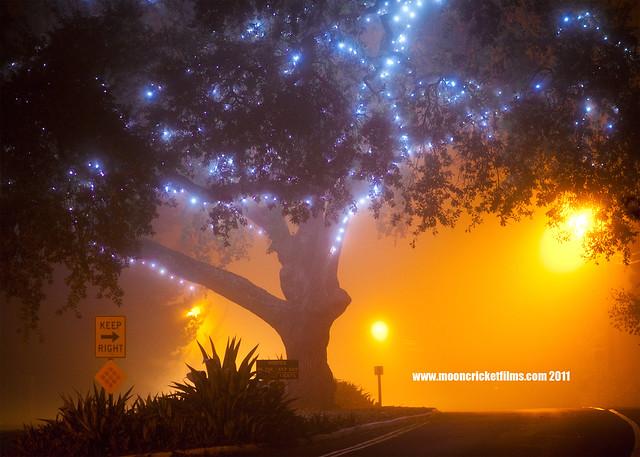 treeoflightscopy