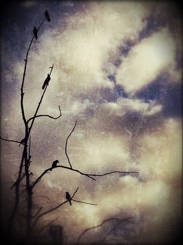 166/365- Birds and branches by elineart