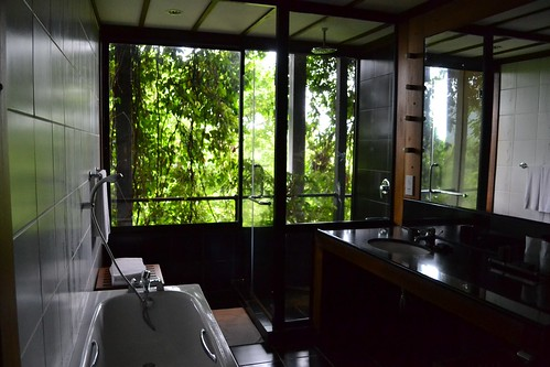 My bathroom, opening into the jungle!