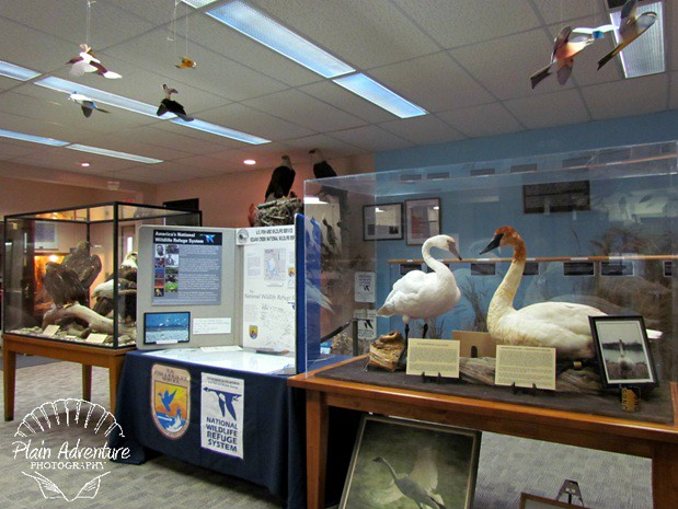 Squaw Creek Wildlife Refuge Displays