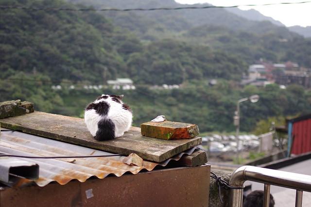 KR 猴桐玩貓咪