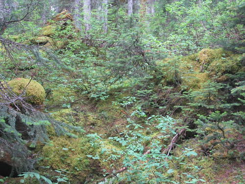 Magical Understory at Yoho
