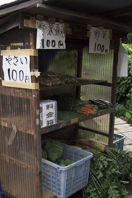 110612_135143_野菊のこみち