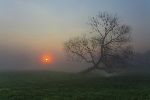 morning light cloud sun sunlight tree green nature grass misty fog sunrise landscape dawn countryside early spring colorful europe day mood quiet power view outdoor magic foggy meadow poland sunny scene silence lonely daybreak lonelytree liw masovian emershot