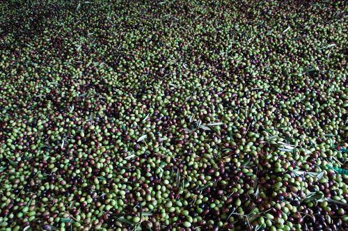 I prodotti dell'Agriturismo Laghel 7 Ad Arco