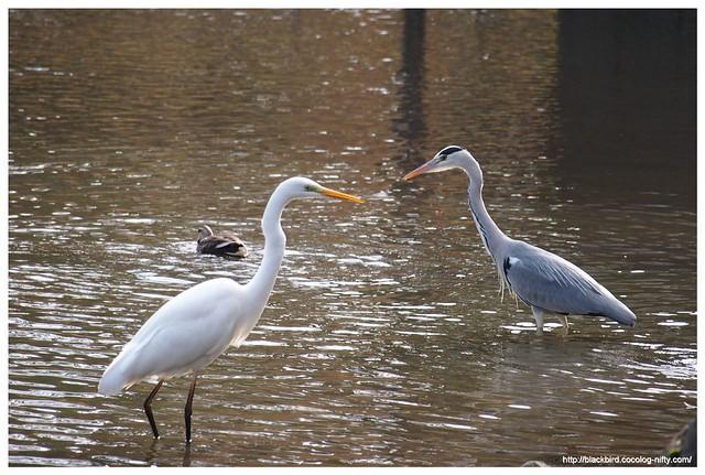 Photo:Waterfowl #02 By osanpo