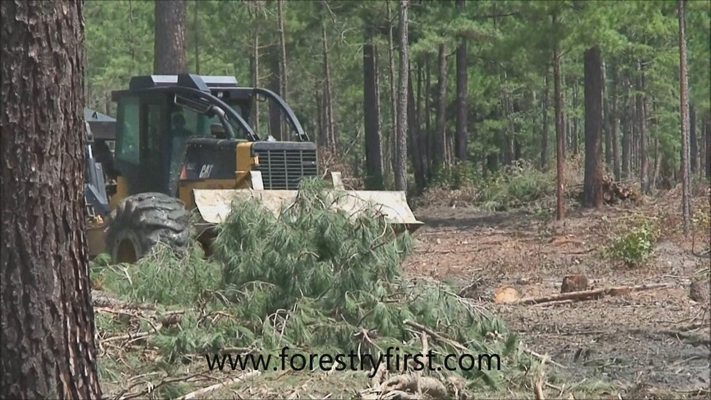 Forestry First's most interesting Flickr photos | Picssr
