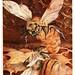 017-El duelo de las  reinas-The life of the bee 1901-Ilustrada por Edward Detmold