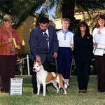 Las Vegas NV AKC Nationals 2005 Judge Mrs.Anna Katona ,Ed Thomason (handler) Hana Brezinova of Tipit Z Hanky