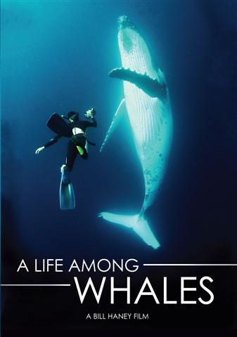 Life among whales
