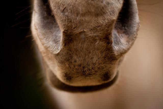 Horses 9374