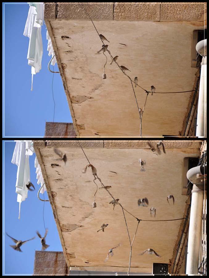 Decenber sparrows