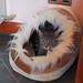 Pippi in bed