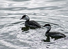 Bird Species #71
