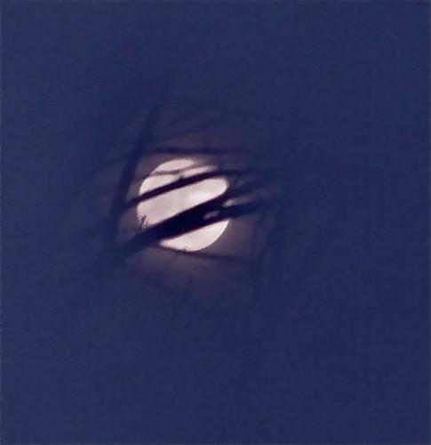 Wolf Moon 02