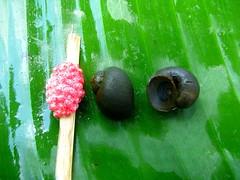 福壽螺及其卵粒。攝影:葉大詮。