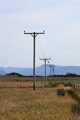 prairie, field, plain, overhead power line, electricity, rural area, grassland,