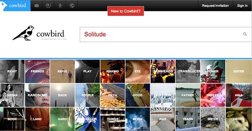 Solitude, Cowbird