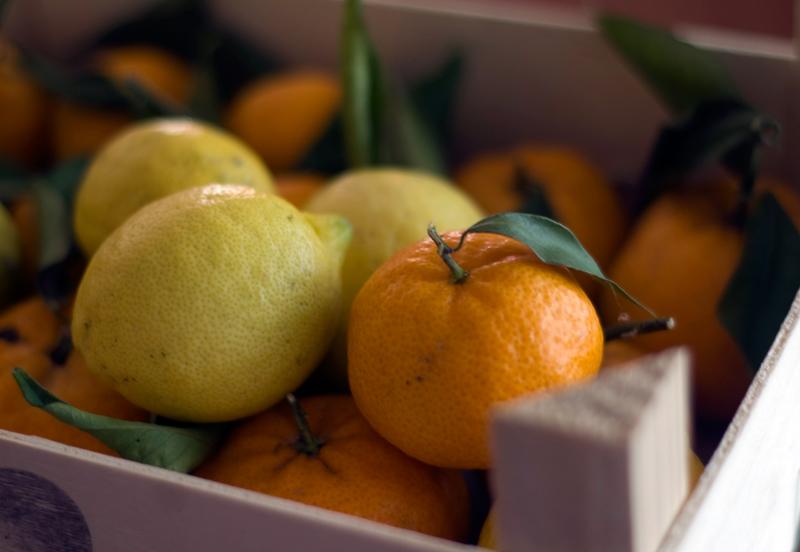 Citrinos // Citrus Time