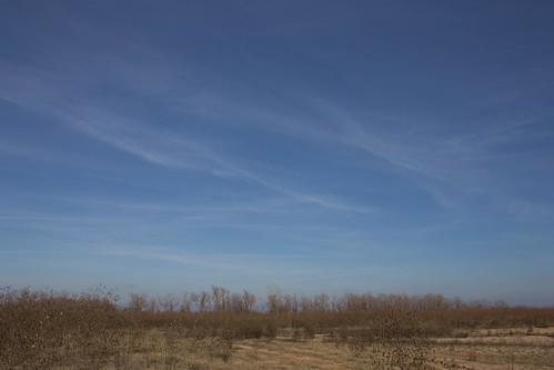 Wasteland Sky