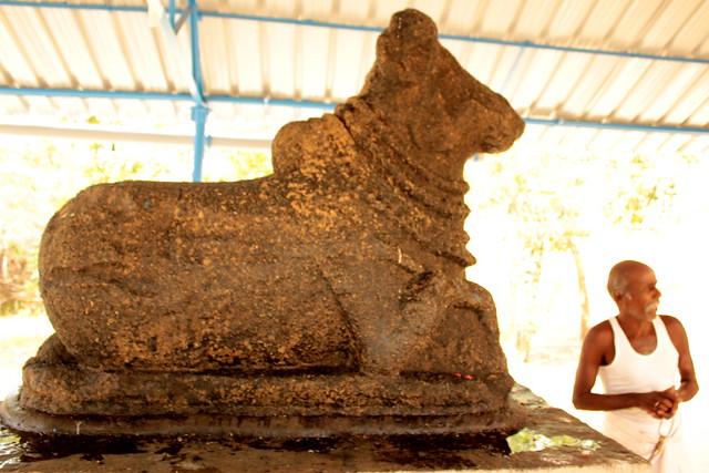 Nandhi facing Maragatha Natarajar