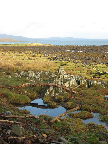 pool grass rocks driftwood deadwood foreshore distant instantfave garlieston