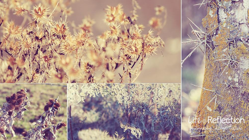 lavendar in january