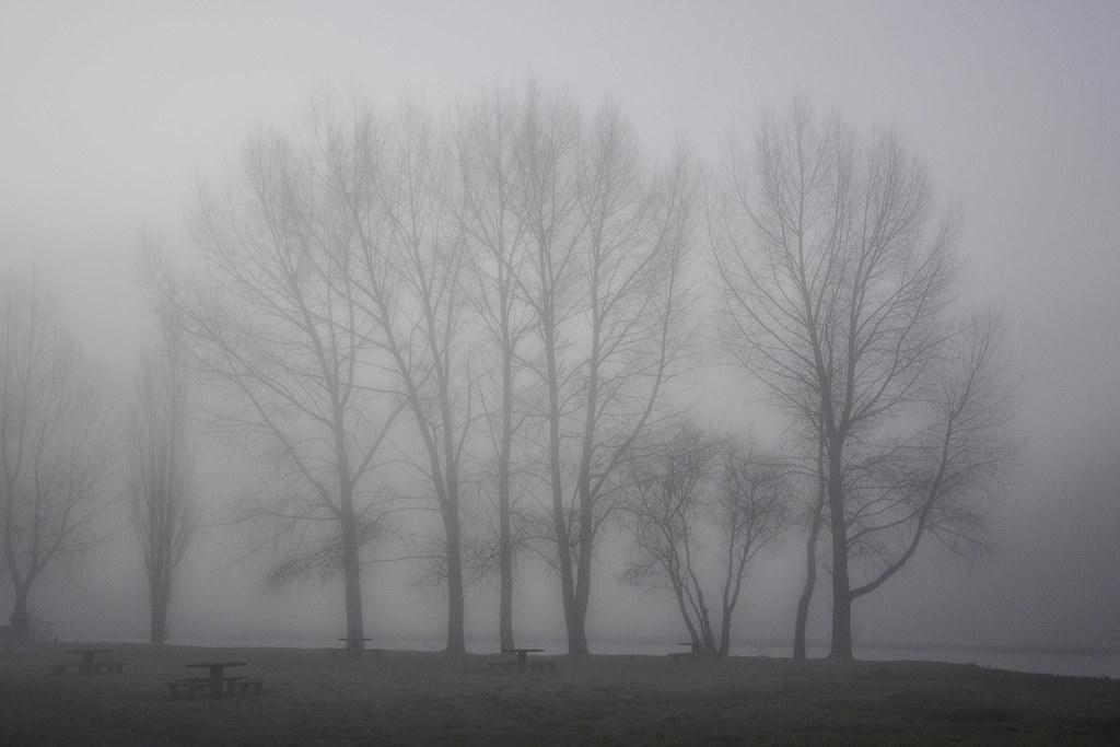 Petit matin brumeux à Picauville (2239)