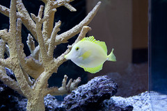 fish-tank-aquarium-custom-installed-bradenton-sarasota-florida-6