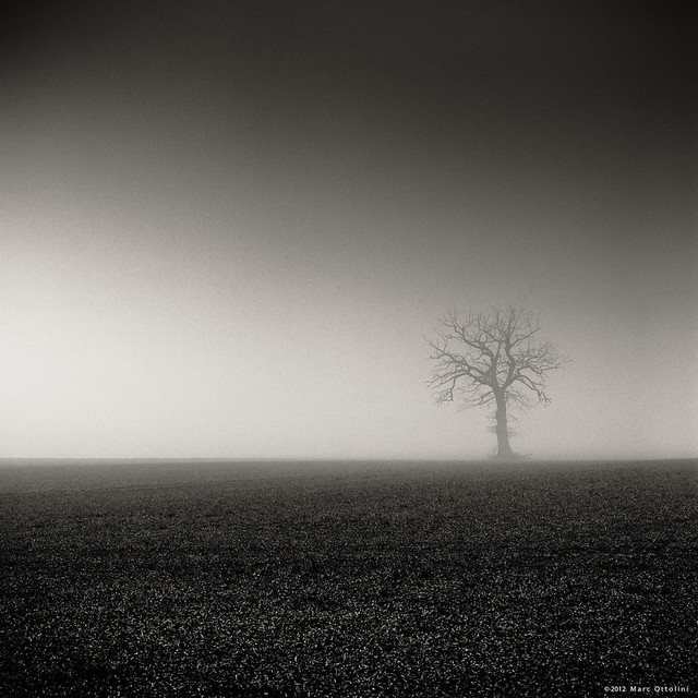 Dead Foggy Tree II