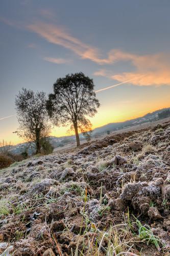 sky cloud tree portugal grass sunrise frozen dirt leiria tamron1024mmf3545diiildsp