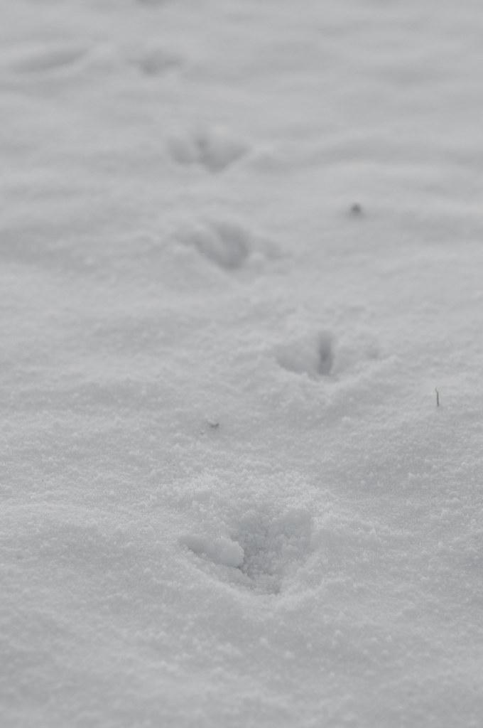 afbeeldingen winter sfeer