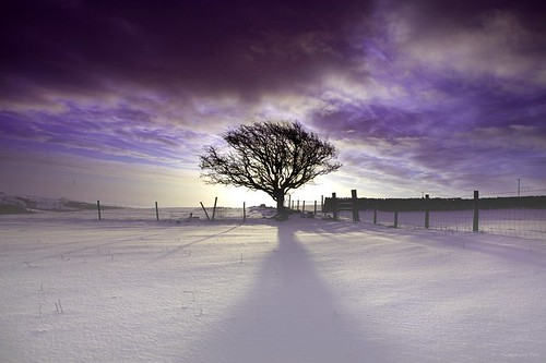 winter snow tree silhouette sunrise landscape dawn shadows