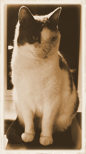 Harry the Cat (in Sepia)