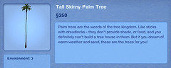 Tall Skinny Palm Tree