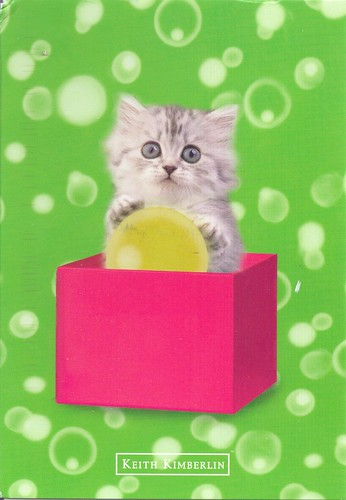 Keith Kimberlin Sweet Kitten in Box
