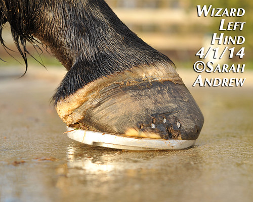 Wizard's hooves: 4/1/2014