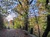 alberi e segnavia