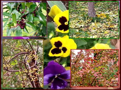 Fall collage 11-26-11 by sparrow72