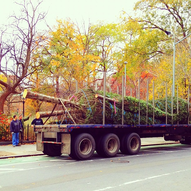 Xmas trees about to go up in Washington Square Park #walkingtoworktoday