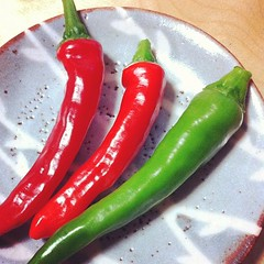 plant(0.0), cayenne pepper(1.0), chili pepper(1.0), vegetable(1.0), serrano pepper(1.0), tabasco pepper(1.0), bell peppers and chili peppers(1.0), bird's eye chili(1.0), peperoncini(1.0), produce(1.0), food(1.0), pimiento(1.0), malagueta pepper(1.0), jalapeã±o(1.0),